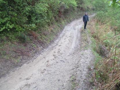 Tracks on the mud